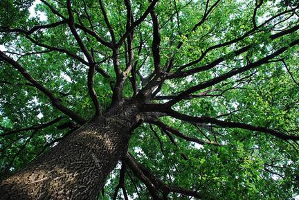 albero, legambiente, verde