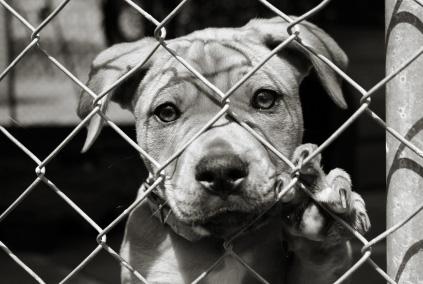 colletta alimentare, cani, canile