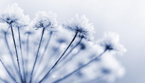 gelo, soffioni, inverno, freddo