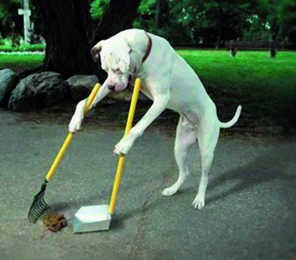 cacca, cane