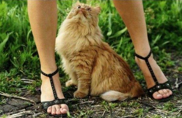 gatto, topa, ragazza