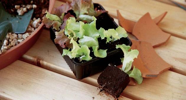 orto sul balcone, insalata