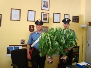 Piante di marijuana carabinieri arresto