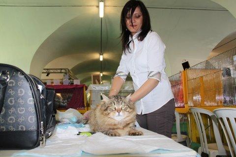 san giorgio felina, cittadella, gatto
