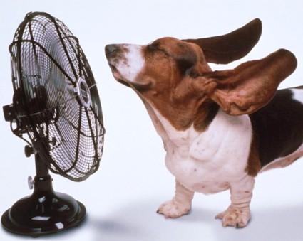 caldo, cane, ventilatore