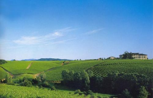 colline novesi campagna natura campi vigne