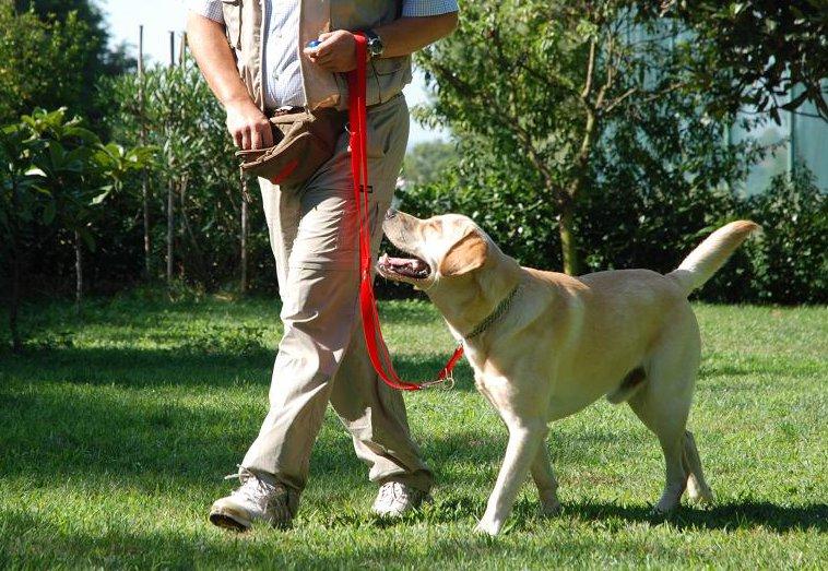 cane, passeggiata, guinzaglio