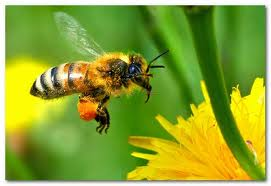 ape miele fiore