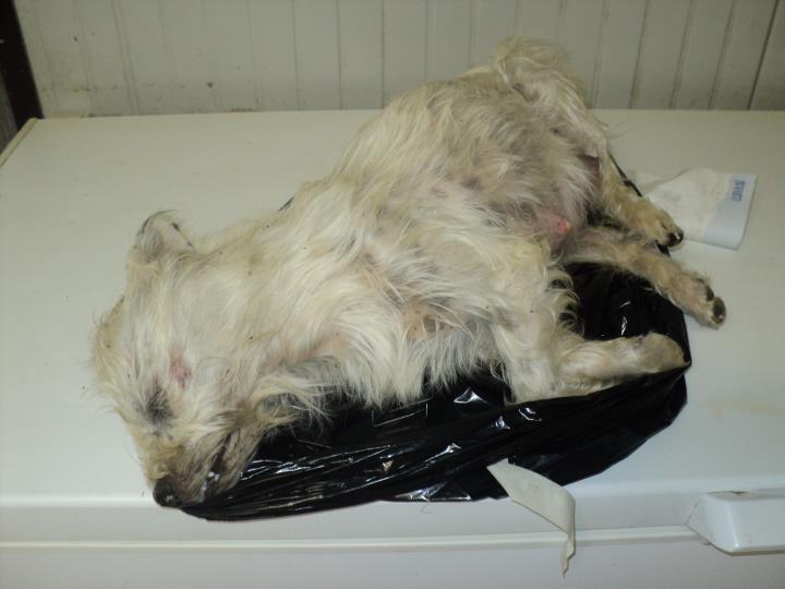 cane morto lav abbandono