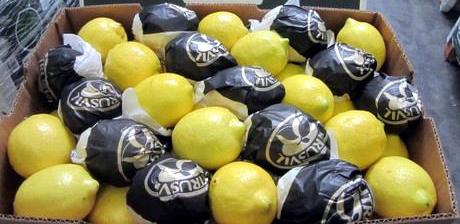 limoni argentini, limone
