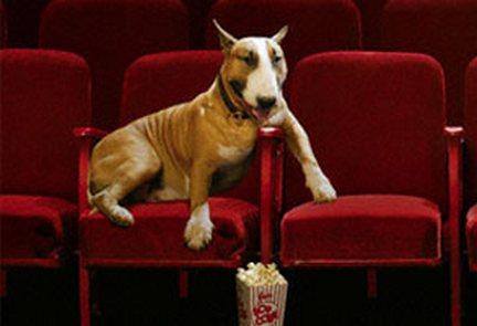 cane, cinema
