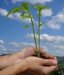 eco-ambiente