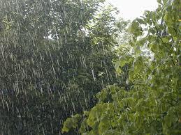 pioggia alberi