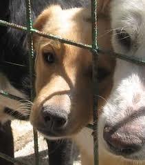 cani, gabbia, maltrattamento